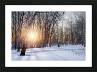 DSC_0351 10    1 Picture Frame print