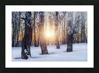 DSC_0347 10     1 Picture Frame print