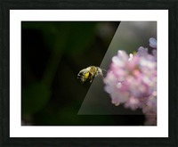 Bee Happy Picture Frame print