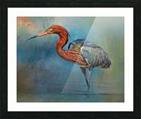 Painted Reddish Egret Picture Frame print