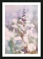 Soft Vintage Lupine Picture Frame print