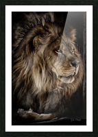 A Lions Profile Picture Frame print