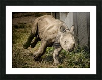 Baby Rhino Picture Frame print