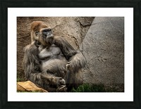 Big Daddy Silverback Gorilla Picture Frame print