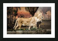 The Loving Lion Couple Picture Frame print