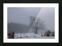 Tree in the Mist Picture Frame print