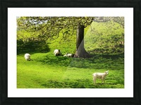 Finding Shade - Northern Ireland Picture Frame print
