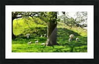 Finding Shade - Northern Ireland 2 Picture Frame print