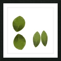 4 Leaves Picture Frame print