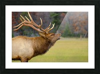 Call of the Wild Picture Frame print
