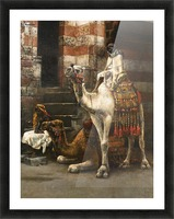 Camels on Cairo street Picture Frame print