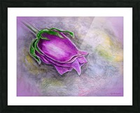 Dreamy Rose Picture Frame print