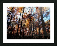 Golden Autumn Picture Frame print