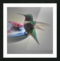Colibris Picture Frame print