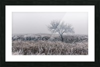 Hoar Frost Picture Frame print