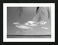 Peeking Palm Tree B&W Picture Frame print