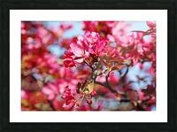 Crabapple Pink Picture Frame print