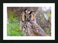 Owls Picture Frame print