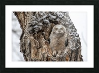 Great Horned Owlet - Can I come out yet Picture Frame print