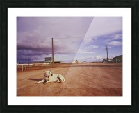 Lone dog in Outback town Australia Picture Frame print