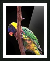 Colorful Bird on branch Picture Frame print