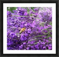Flight of the Bumblebee Picture Frame print