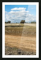 Stubble fields post harvest against blue sky and clouds. Picture Frame print
