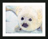 Seal Pup Closeup Picture Frame print