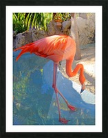Living in Paradise Picture Frame print