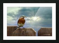 Bluebird in Sun Picture Frame print