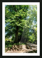 Tree Than Owns Itself   Athens GA 06567 Picture Frame print