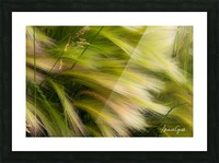 Grasses Of Summer Picture Frame print