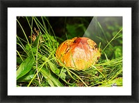 Mushrooms Picture Frame print
