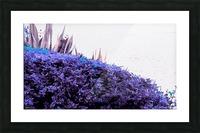 Dancing Violet  Picture Frame print