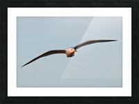Fly like a Seagull Picture Frame print