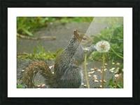 Squirrel paw warming Impression et Cadre photo