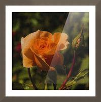 Orange Delight Picture Frame print
