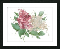 hydrangea Picture Frame print