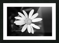 Beautifully White B&W Picture Frame print