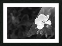 Blooming side flower B&W Picture Frame print