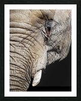 Elephant Close Up Impression et Cadre photo