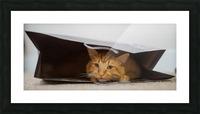 Cat In The Bag Impression et Cadre photo