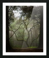 Clearing in the Woods Impression et Cadre photo