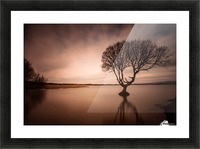 The Kenfig Tree Picture Frame print