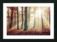 Autumn forest Picture Frame print