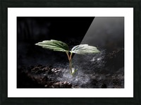 Young Sapling Picture Frame print
