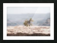 Desert Shrub Grand Canyon 2 Picture Frame print