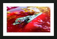 The Monarchs Lion Picture Frame print