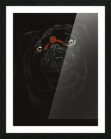 RASPBERRY PUG_COLOR PENCIL_51X69.30 Picture Frame print