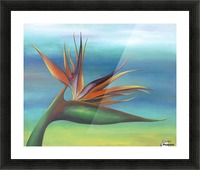 Bird of paradise Picture Frame print